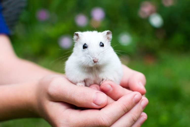 A hand holding a small rabbit in grass